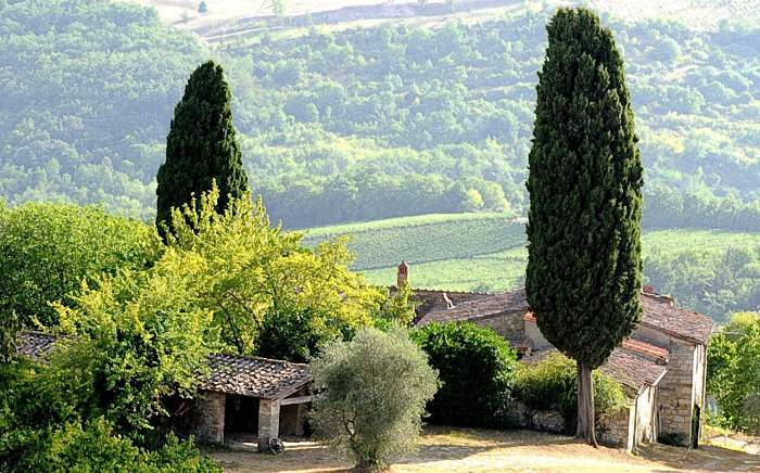 Villa Conca d'Oro, 6 bedroom villa in Chianti & Countryside, Tuscany Photo #4