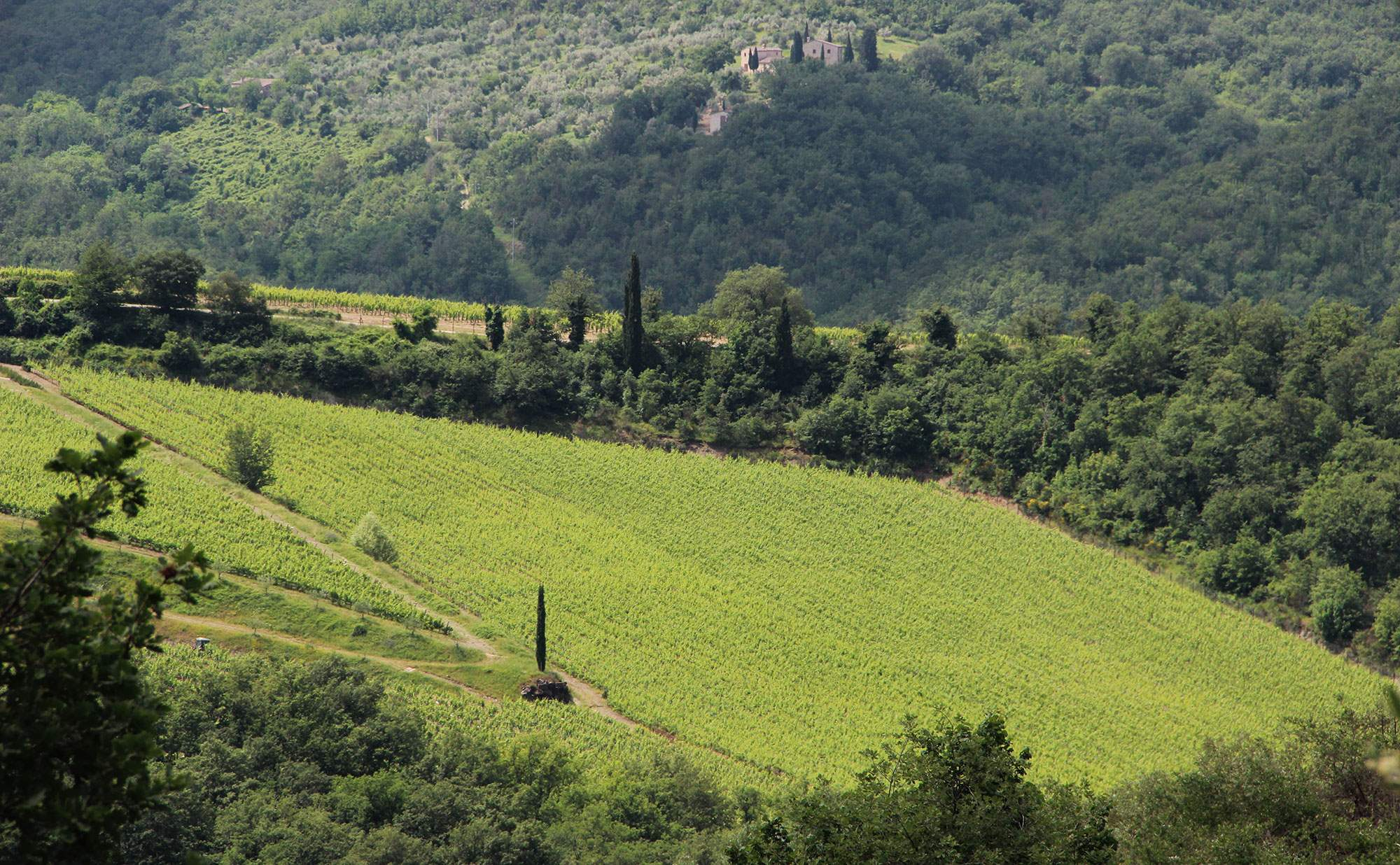 Villa Giacinto, 6 Bedroom rate, 6 bedroom villa in Chianti & Countryside, Tuscany Photo #32