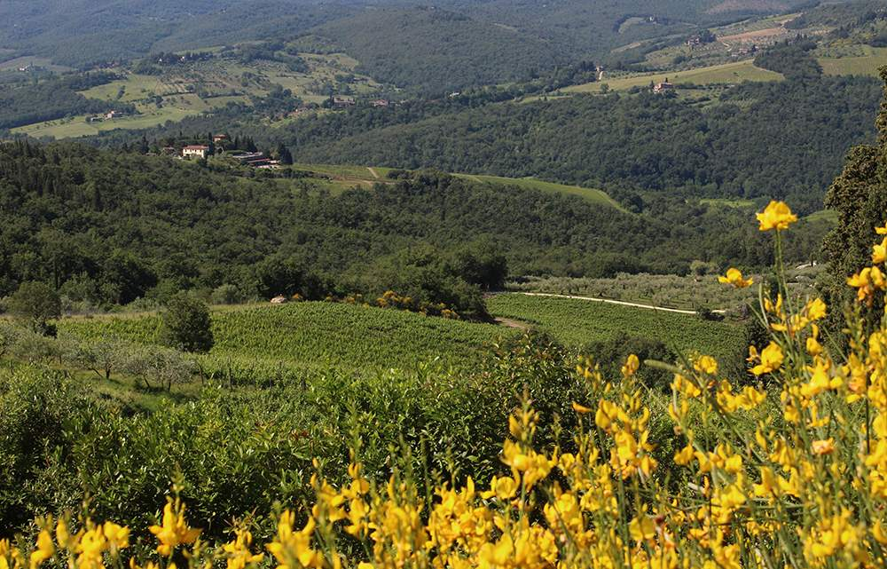 Villa La Valetta, 1 Bed Apt Uva, 1 bedroom villa in Chianti & Countryside, Tuscany Photo #13